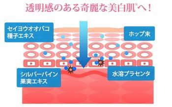 ニキビ跡 ピエリナ.jpg