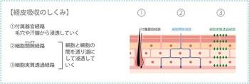 ニキビ跡 RGアクネスキンケアセット.jpg